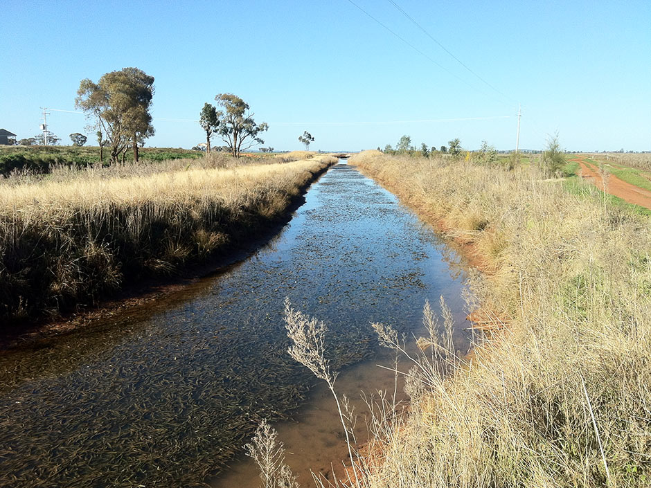 Lake Wyangan Irrigation Scheme